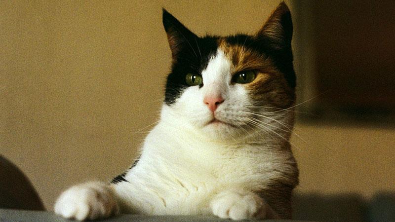 болезни, которыми вас заразит любимый котик