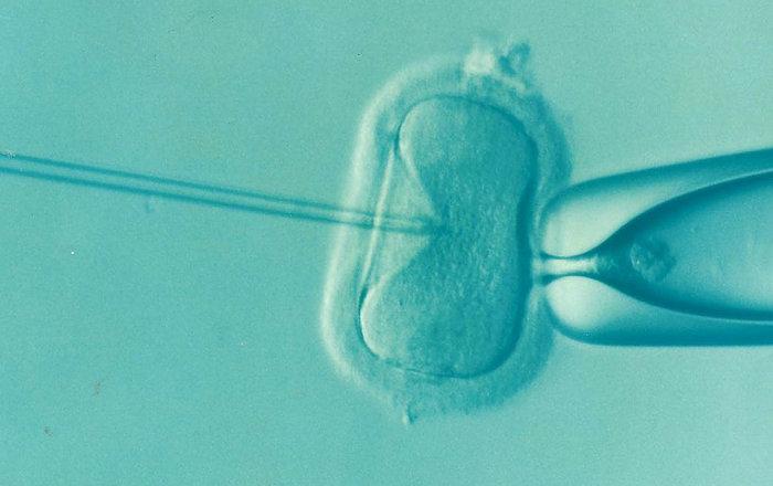 имплантация двух эмбрионов