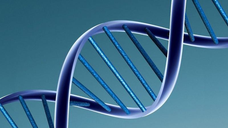получены новые данные о генетической природе шизофрении