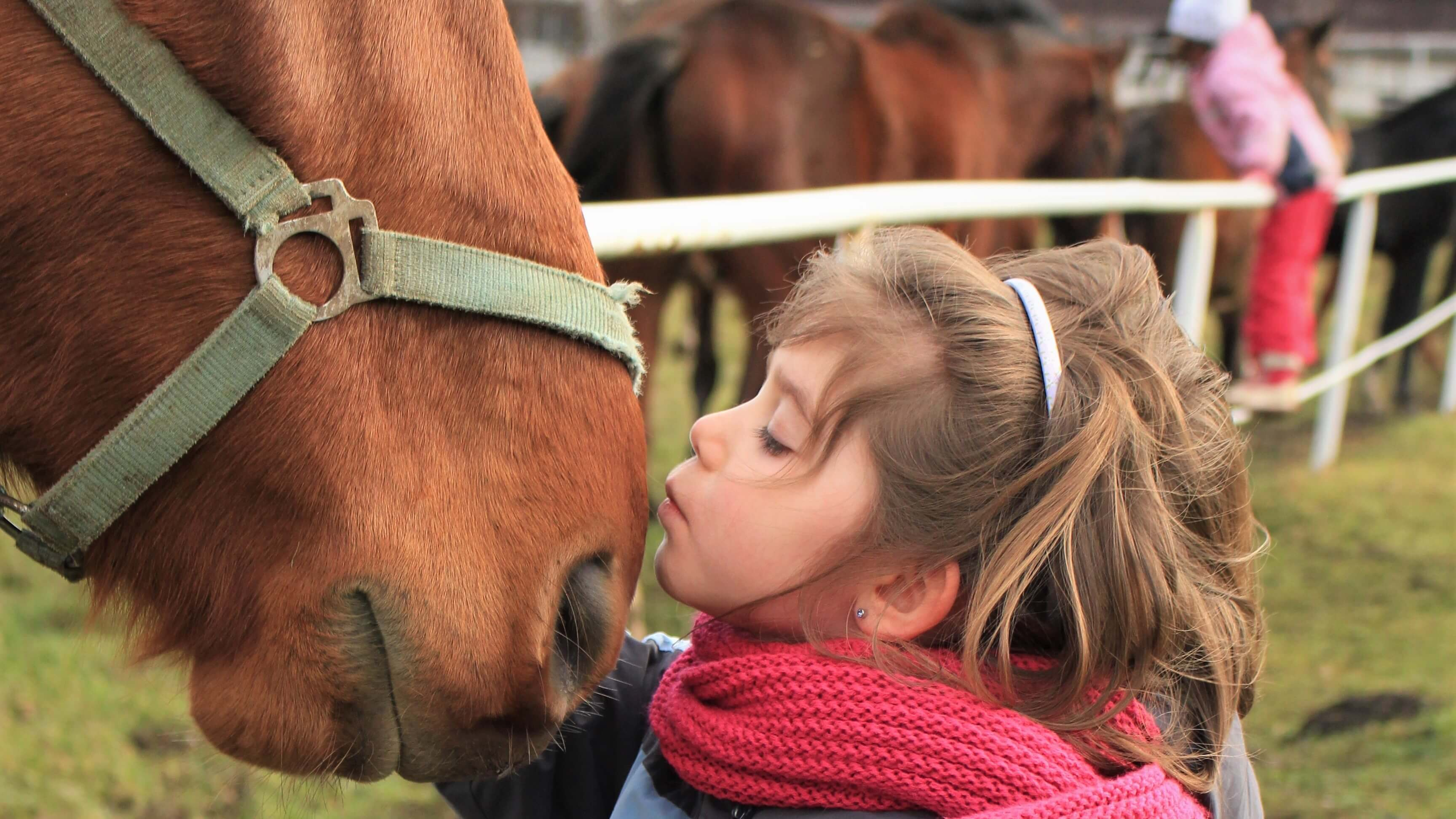 Лечение животными: 4 популярных способа