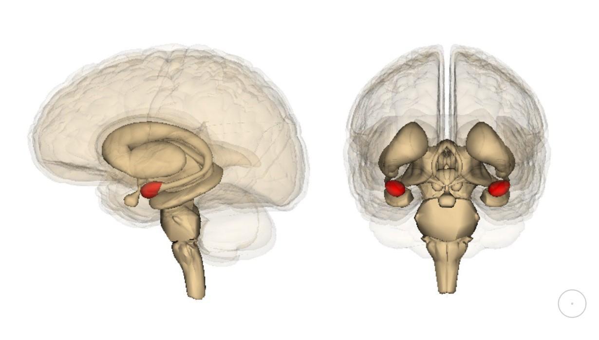 как мозг охотится