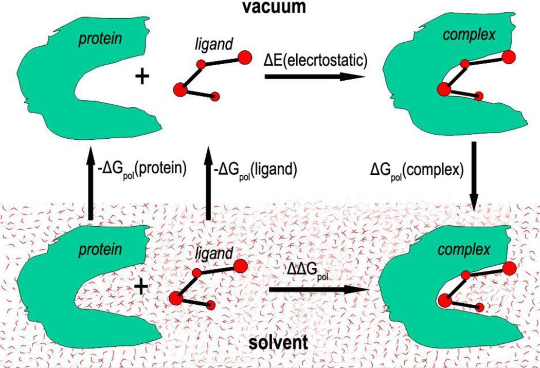 Исследователи рассчитали энергию взаимодействия белка и лиганда по разным моделям