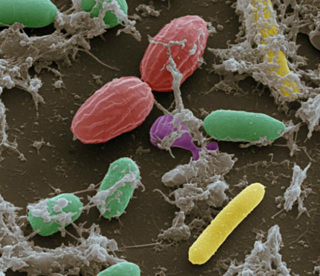 идентифицировать личность можно по микробам на теле человека