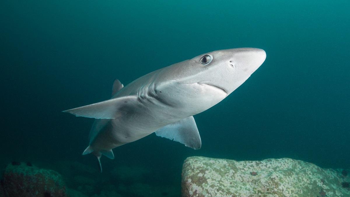 Чудодейственный акулий антибиотик защитит людей от болезни Паркинсона