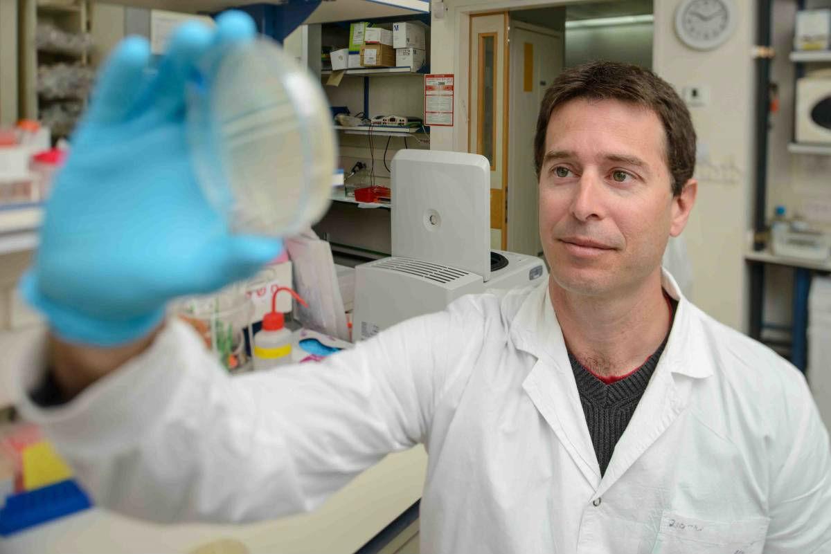 «Здесь был вирус»: патогены отправляют друг другу сообщения