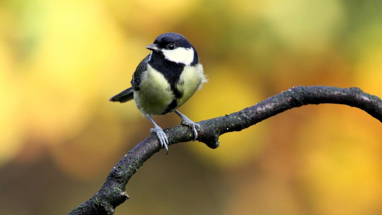 Птицы спасут вас от депрессии