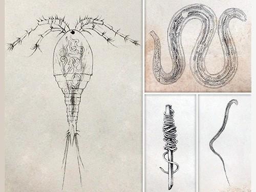 Конец мединского червя