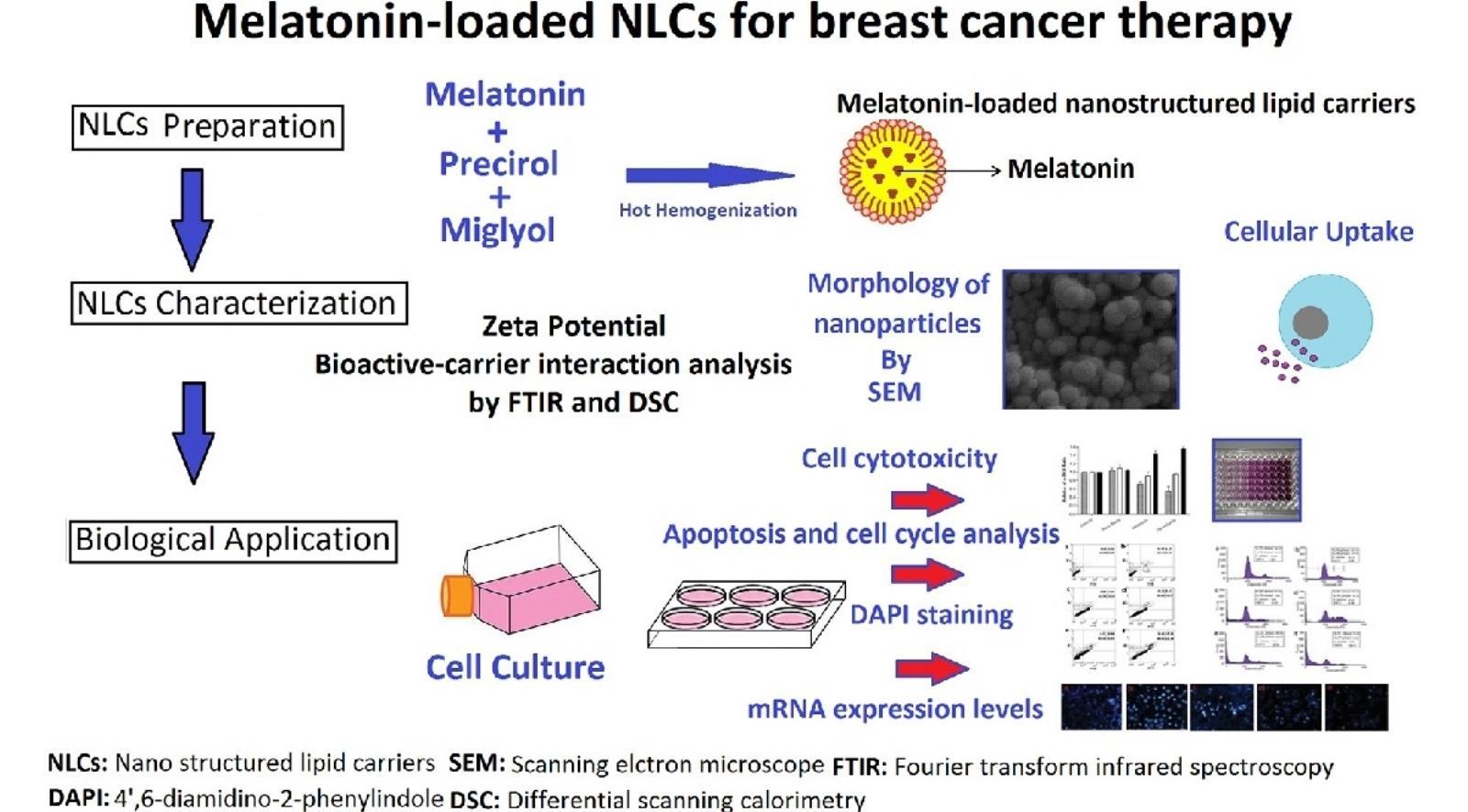 Гормон сна и наночастицы борются с раком груди