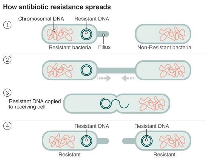 Назад, в прошлое без антибиотиков: глобальная угроза