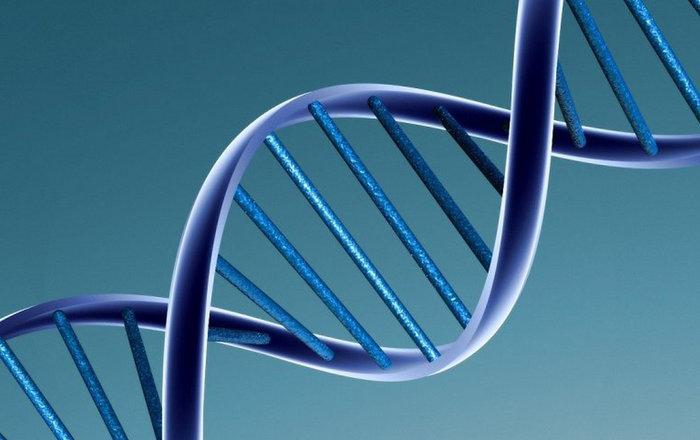 Биоинженеры сделали выключатель из ДНК