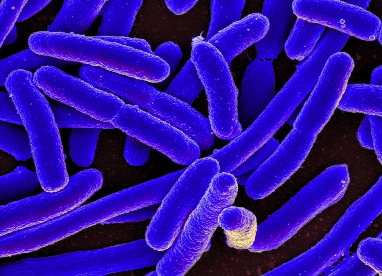 Кишечные бактерии помогают бороться с раком и инфекциями
