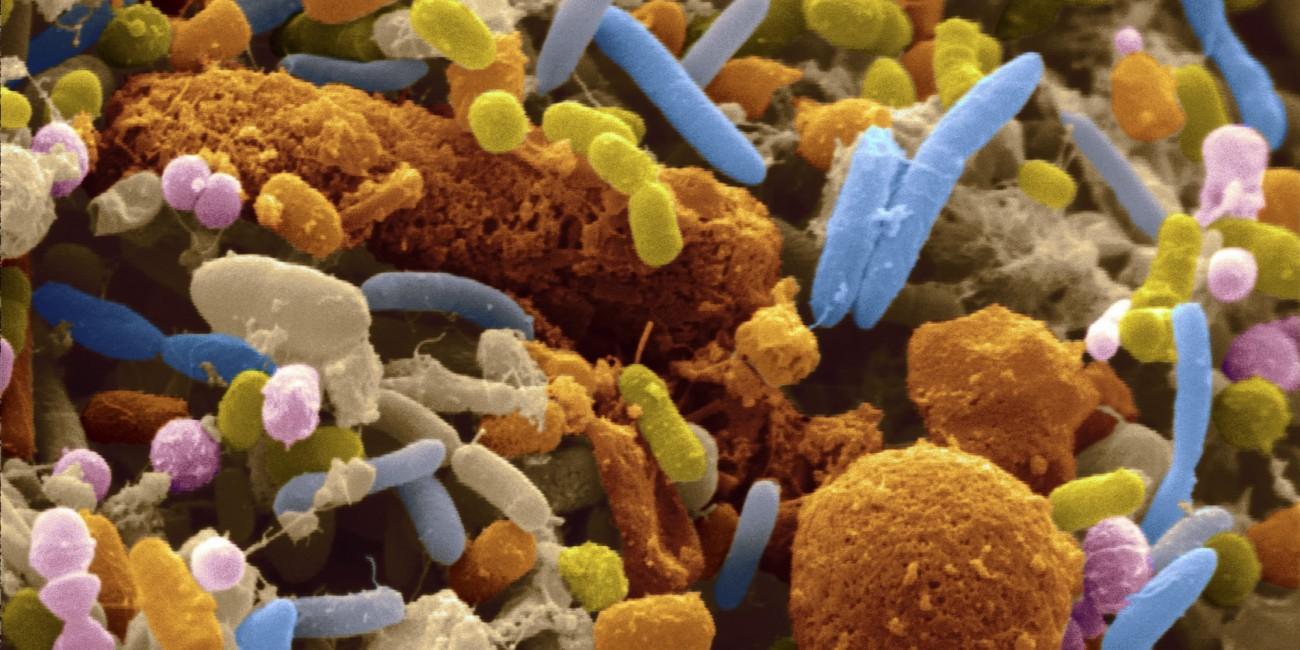 10 фактов о том, как паразиты, вирусы и бактерии помогают людям