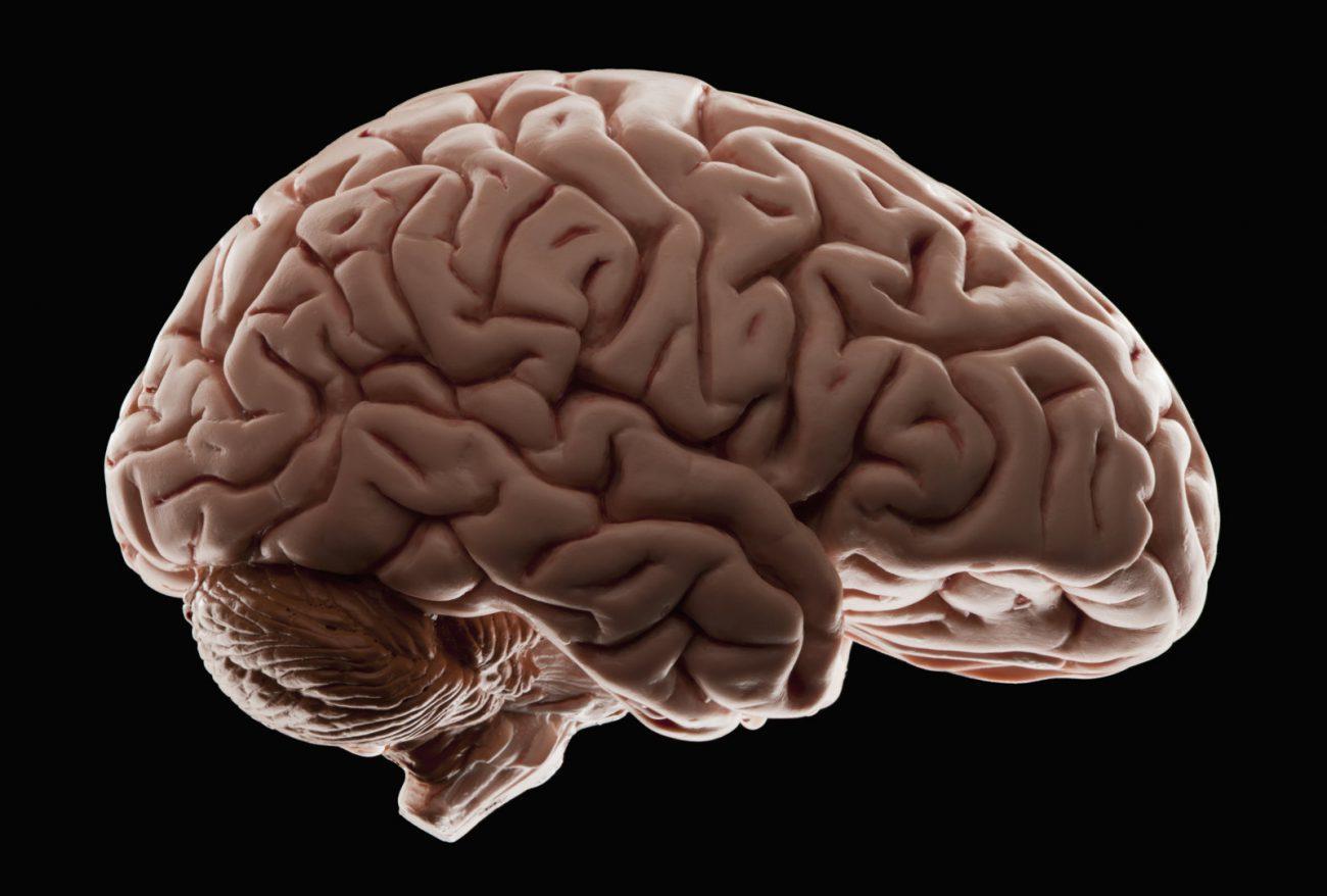 Космические полеты изменяют форму человеческого мозга