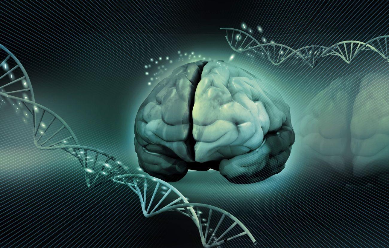 Ученые открыли более тысячи новых генов, связанных с интеллектом