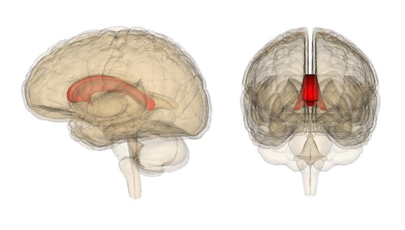 расщеплённый мозг работает как одно целое