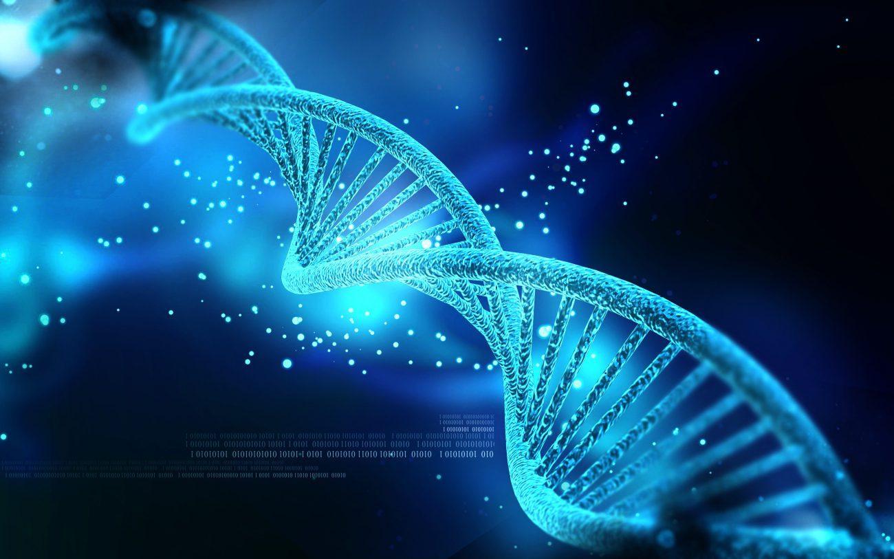 Гены, от которых вырастают крылья