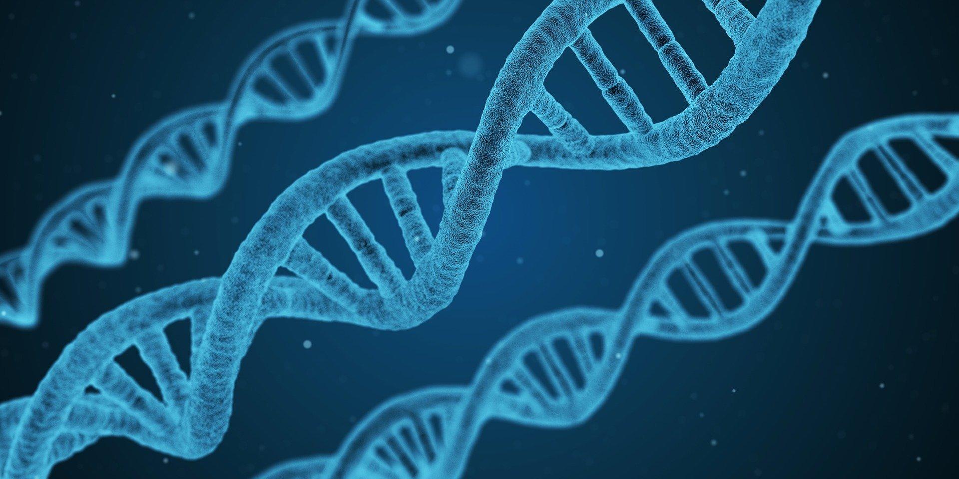 Продолжительность жизни человека зависит от изменений в ДНК