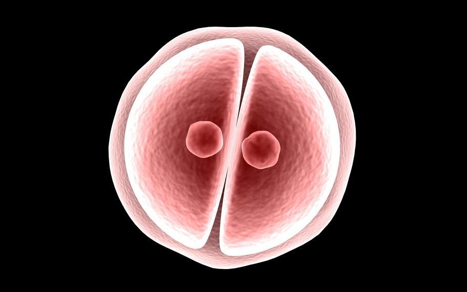 ученые поддержали генетическую модификацию человеческих эмбрионов