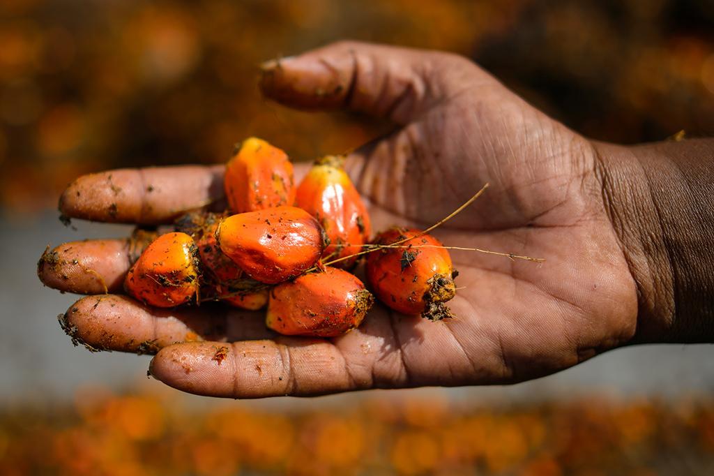 Разоблачаем 4 вечных мифа о пальмовом масле