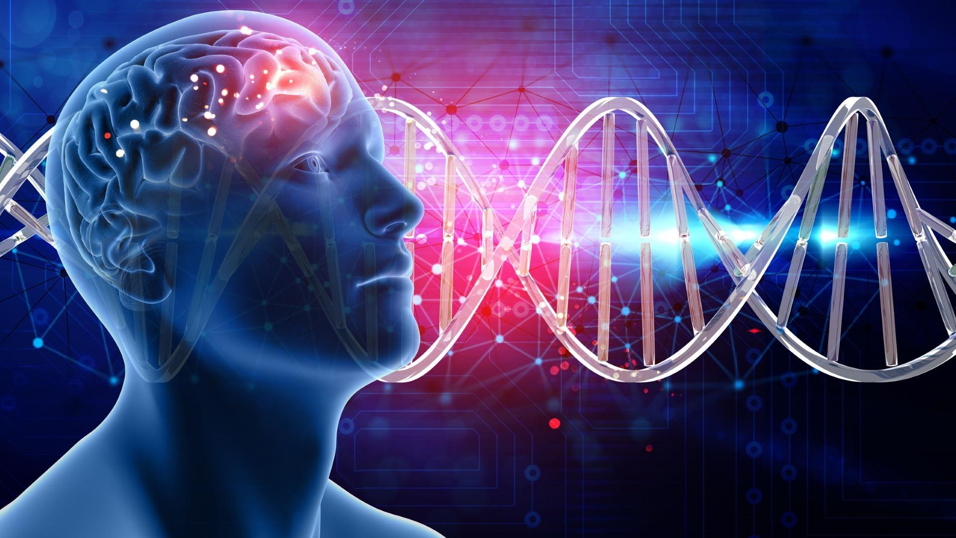 В генах мозга обнаружен избыток особых длинных интронов
