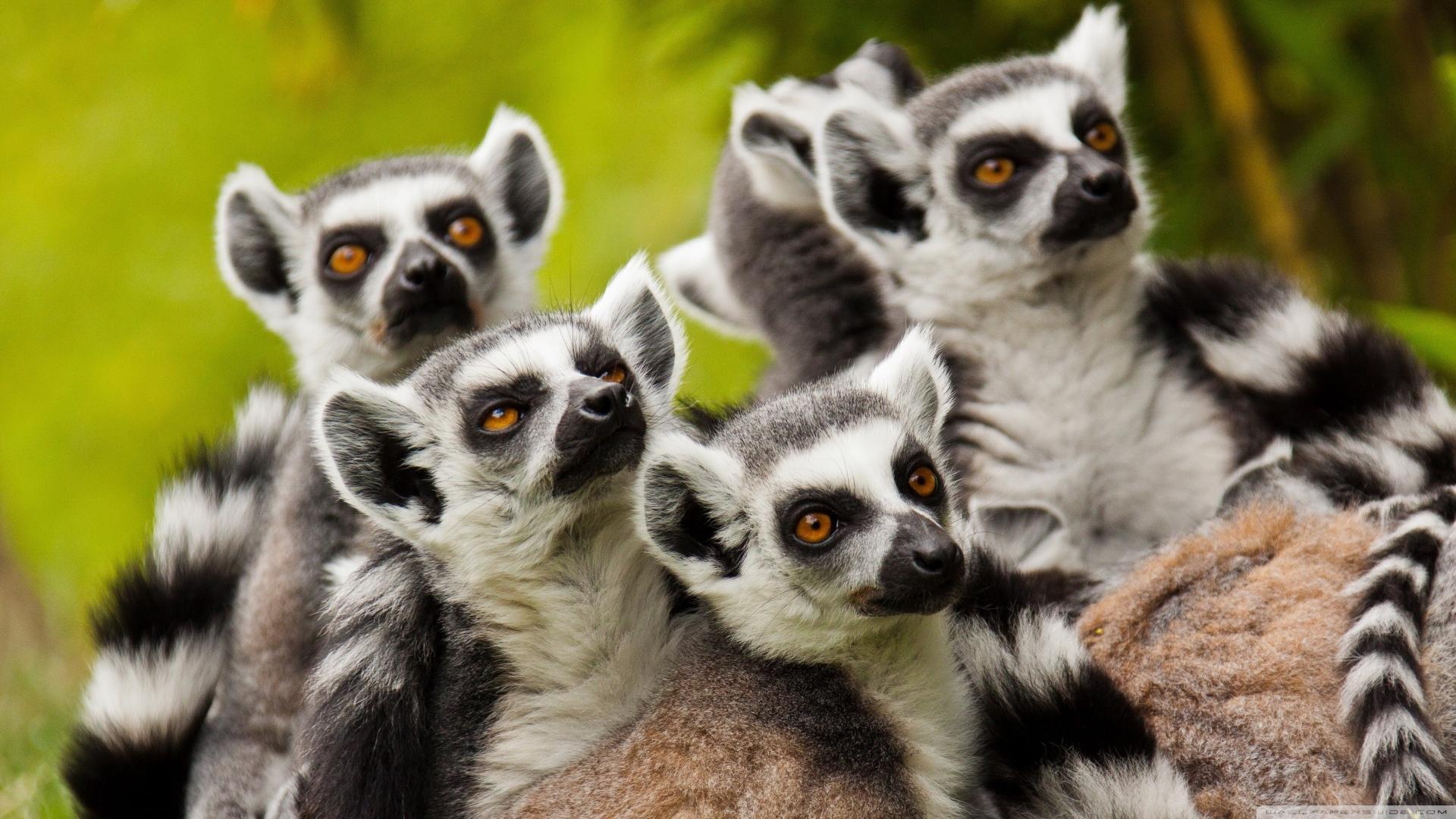Медленный метаболизм обеспечил приматам долголетие