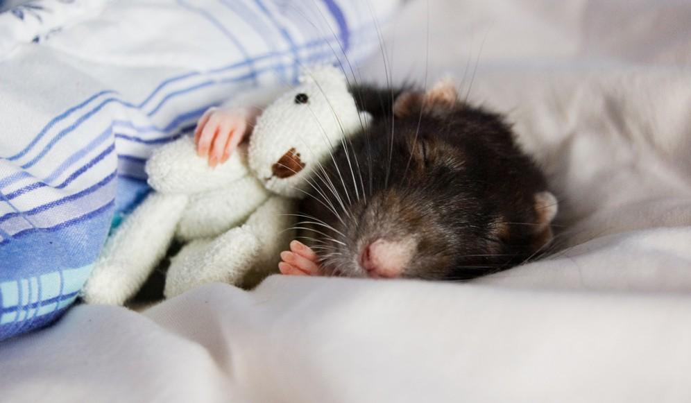 ученые нашли переключатели сна