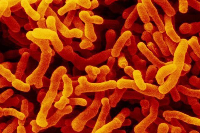 определённые бактерии в кишечнике связали с развитием диабета второго типа