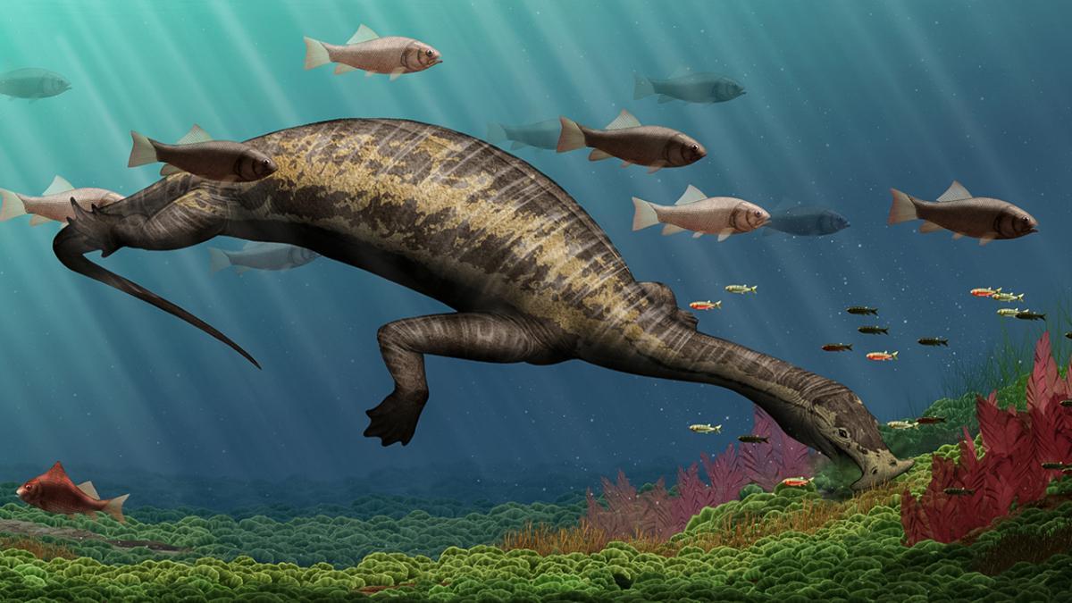 Массовое пермское вымирание породило удивительных морских травоядных