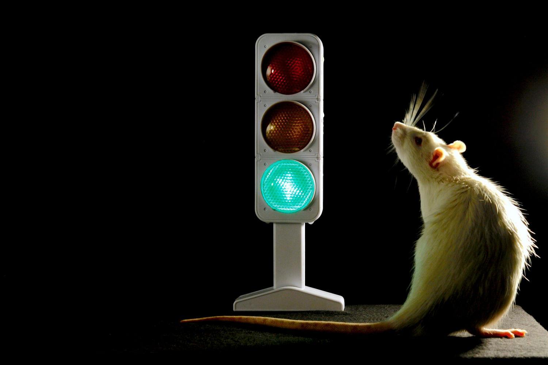 Двигаться или не двигаться: где в мозге принимается решение?
