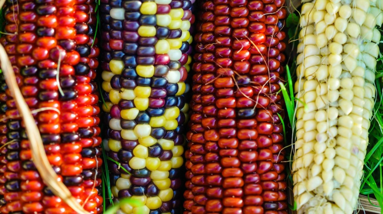 Комиссия РАН опровергнет вред ГМО