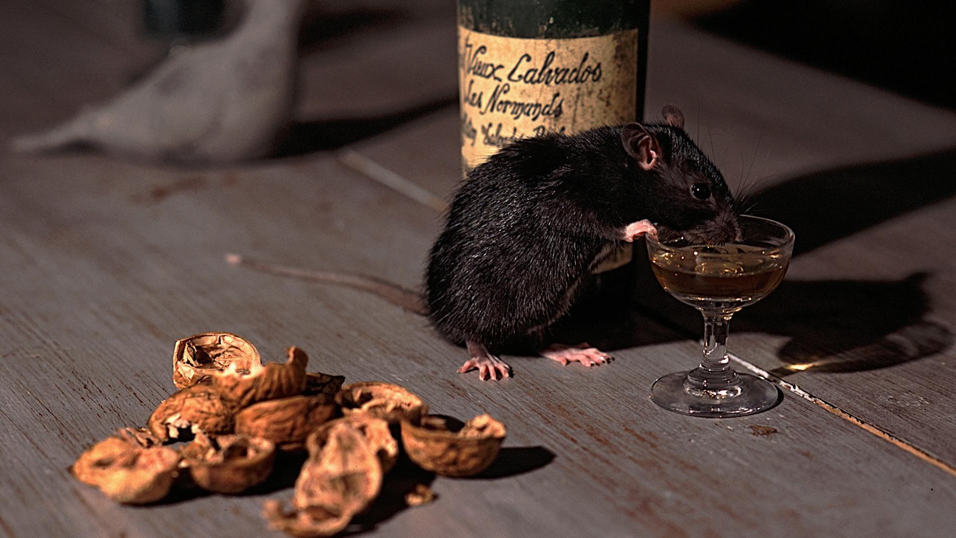 Ученые открыли главный ген алкоголизма