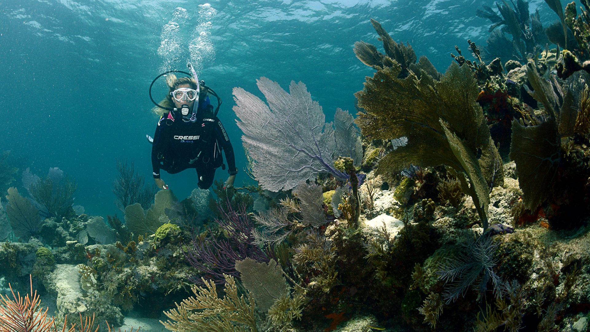 Купаться рядом с морской растительностью безопаснее