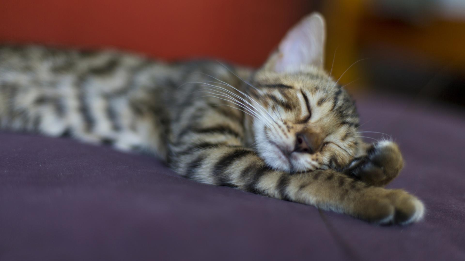 Иммунная система влияет на качество сна