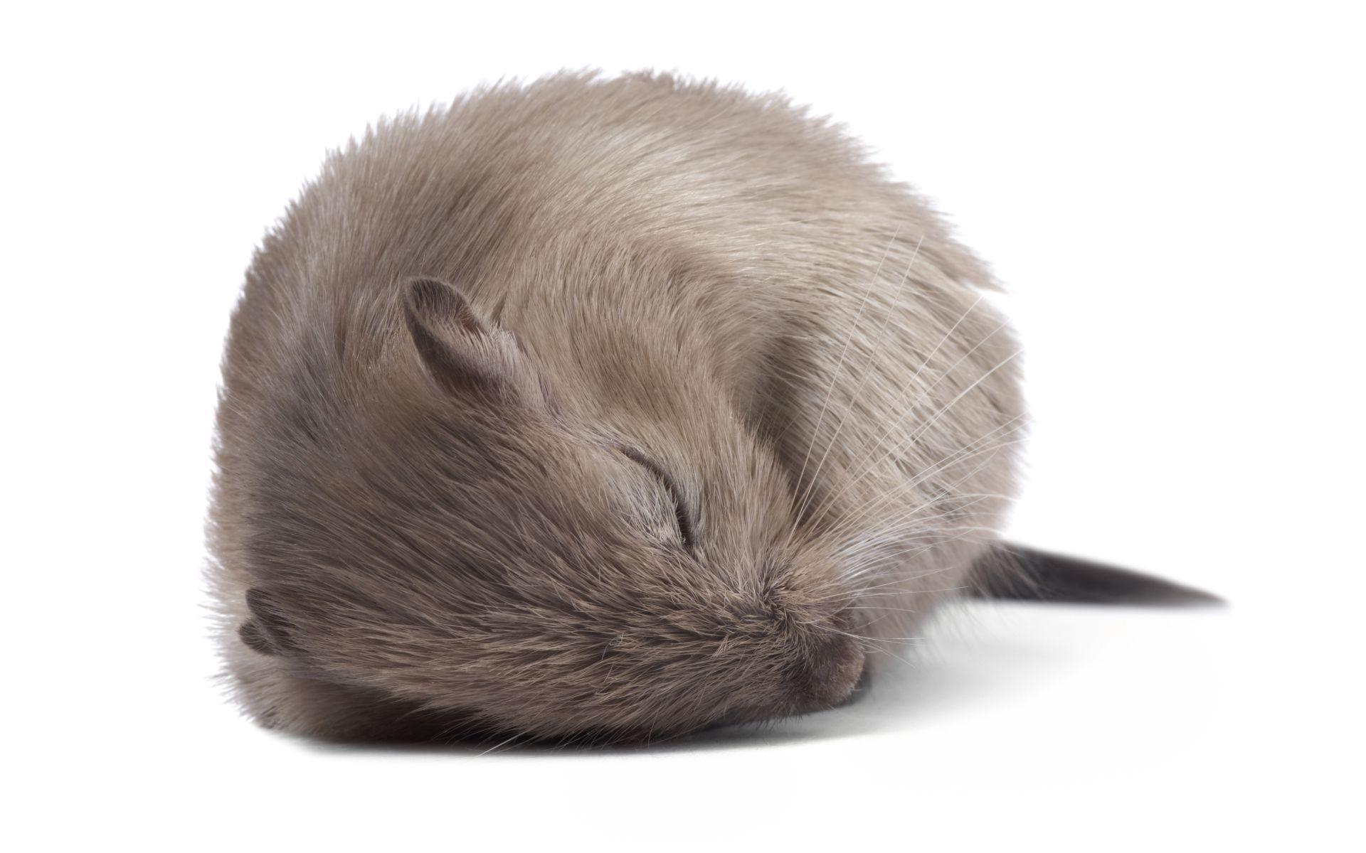 Сон спасает нейроны от перегрузки