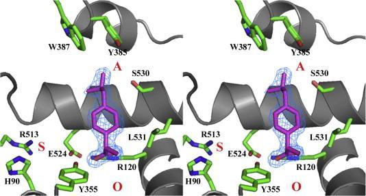 Две формы ибупрофена «в сердце» циклооксигеназы-2