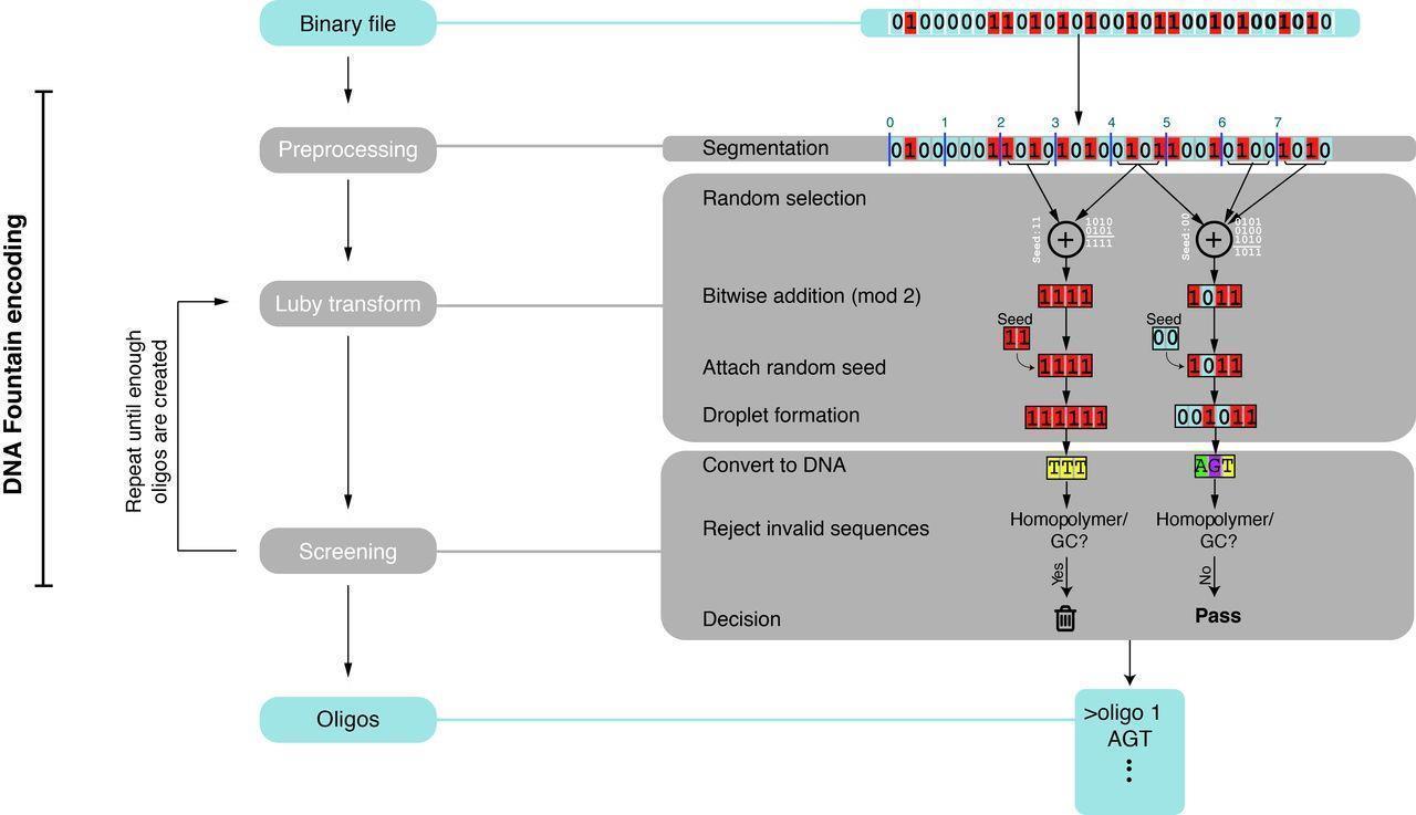 В ДНК записали «Прибытие поезда» и операционную систему KolibriOS