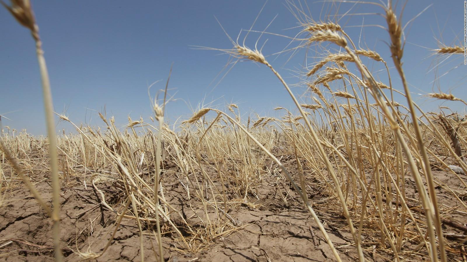 Мировые поставки продовольствия находятся под угрозой из-за неустойчивого климата