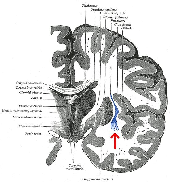 Нейрон размером с мозг