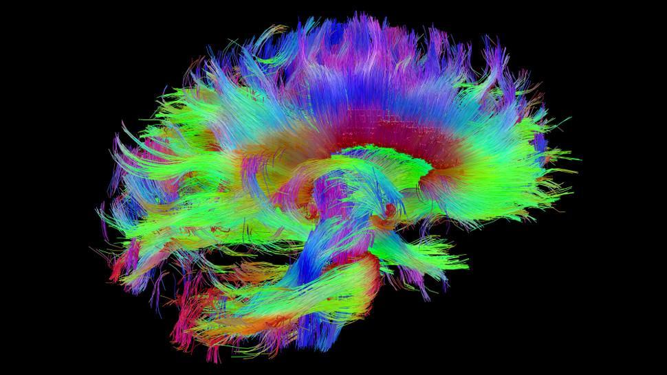 удивительные способности мозга слепых людей