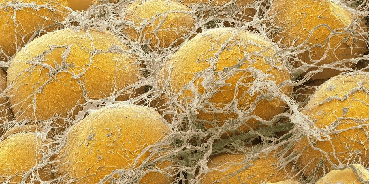 Как нервы сжигают жир