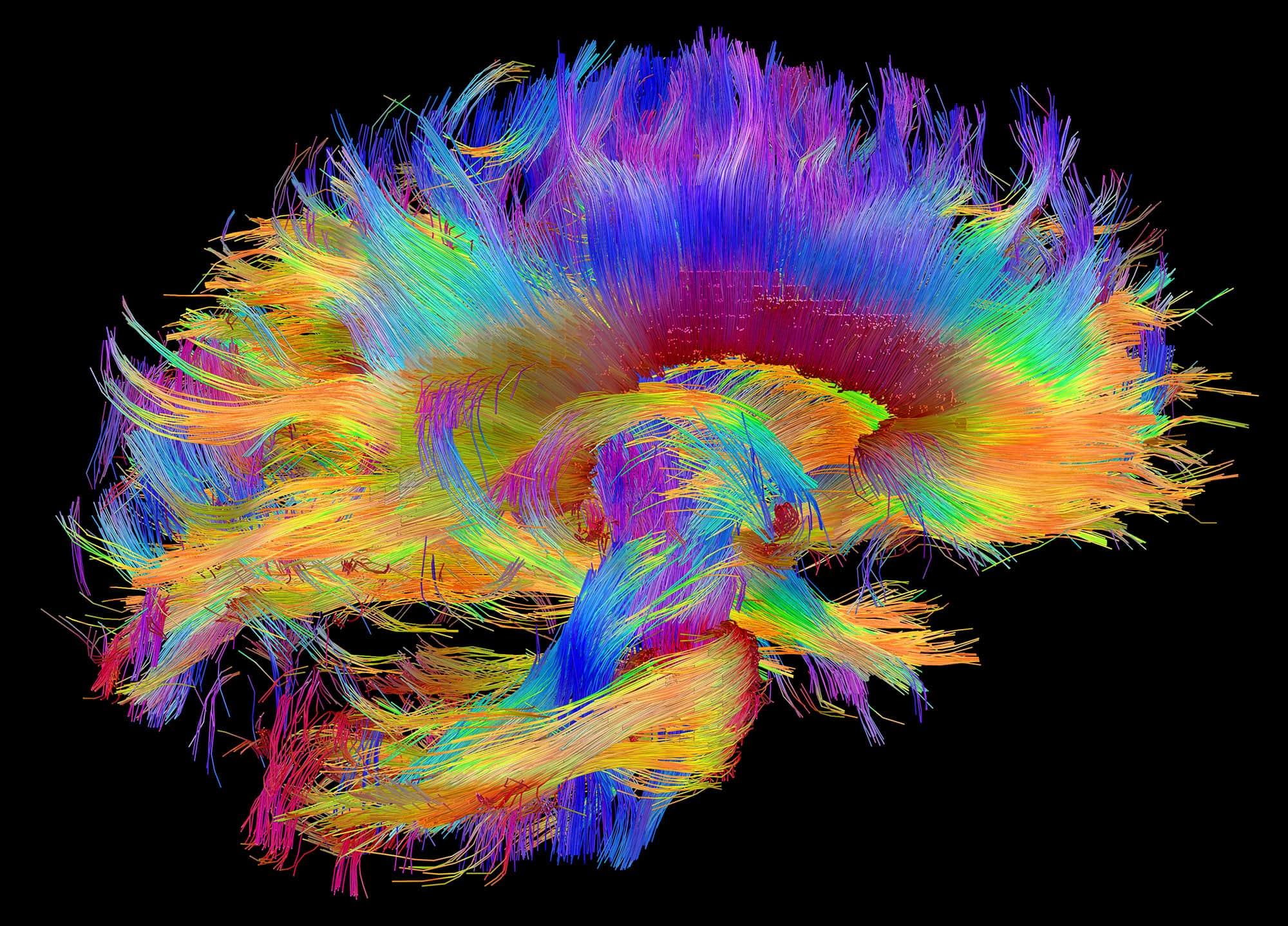 Удивительные способности мозга слепых людей: новые исследования