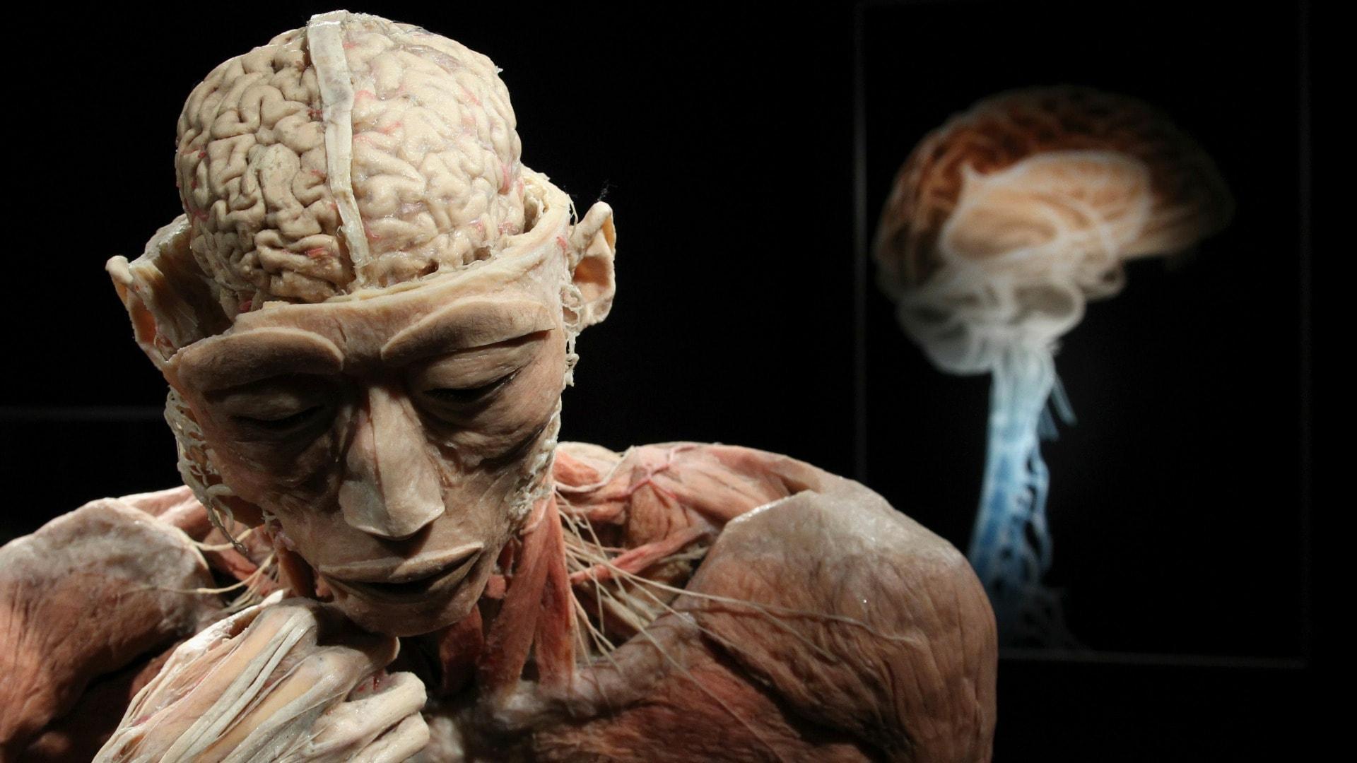 Найден ген старения мозга