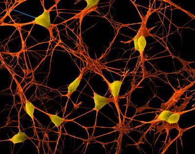 где у нейронов прячется память