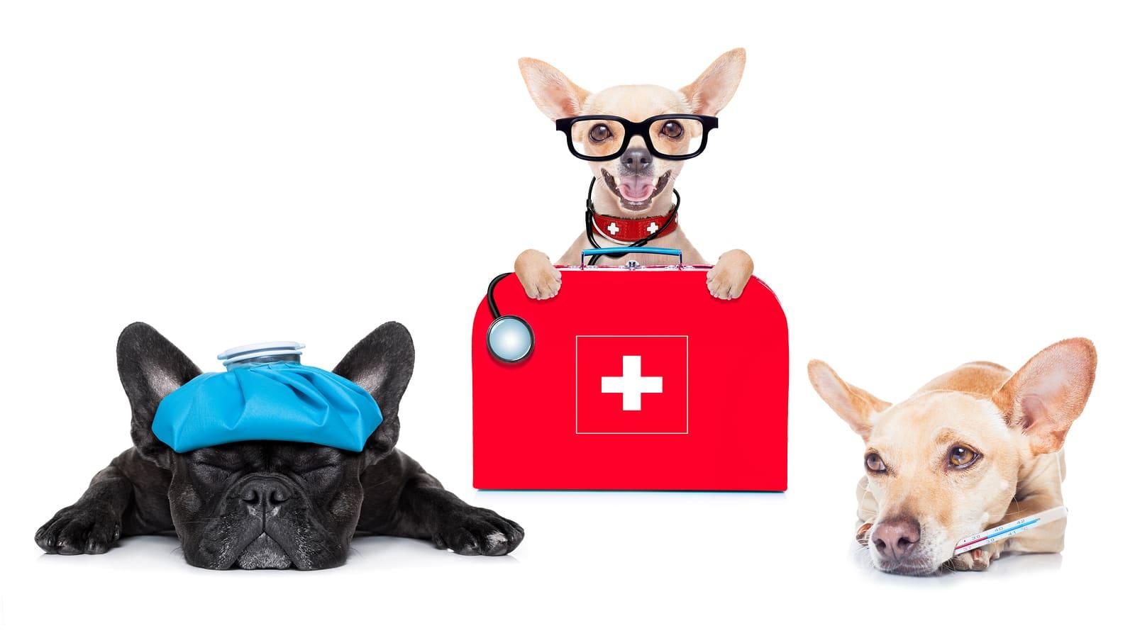 Собаки диагностируют рак, диабет и эпилепсию