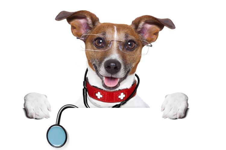 собаки диагностируют рак
