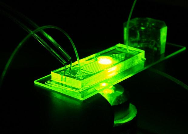 создан орган-на-чипе для изучения преждевременного старения