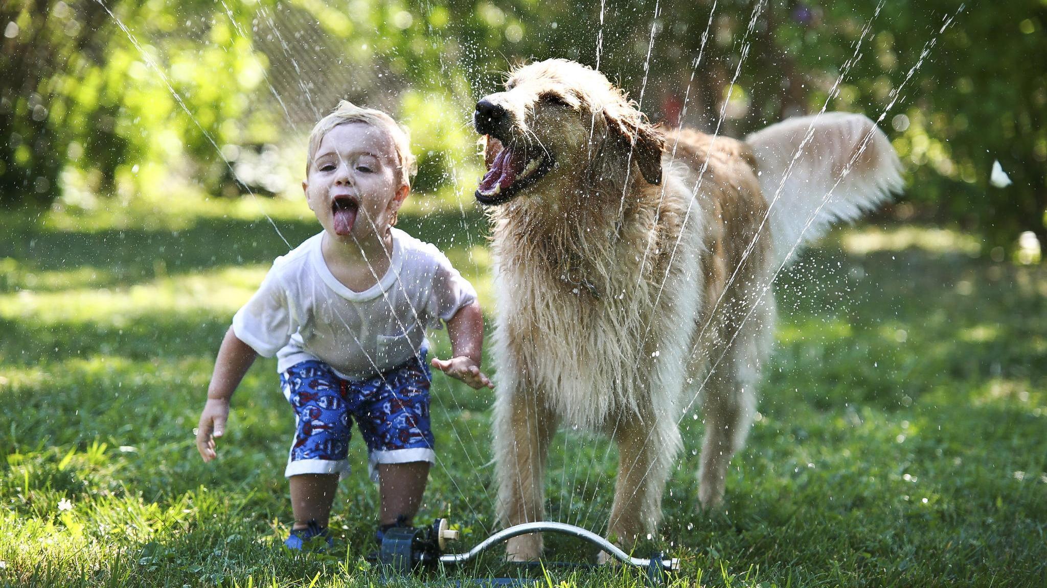 Собаки и дети проявляют сходство в социальном интеллекте