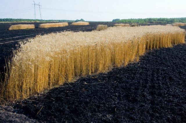 мировые поставки продовольствия находятся под угрозой