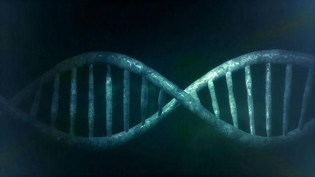 Исследовательница МГУ уточнила механизм ремонта ДНК