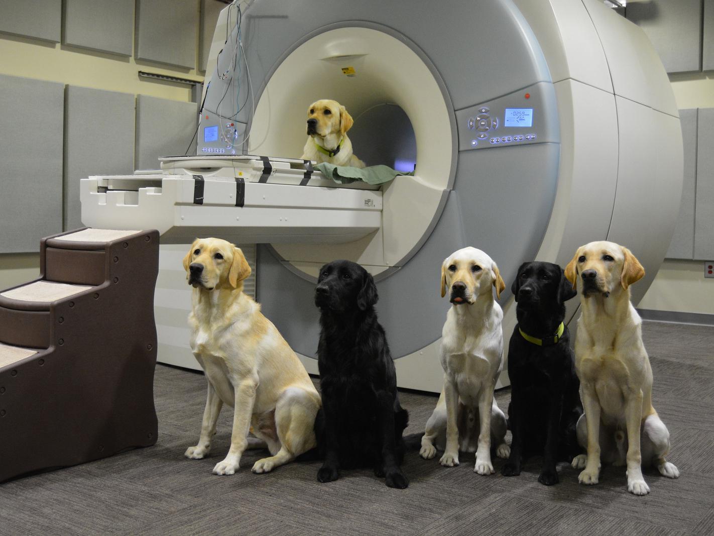 ФМРТ определит собаку-компаньона